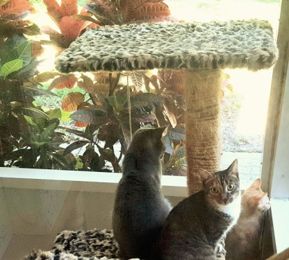They love the screened porch