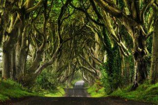Dark-Hedges Ireland